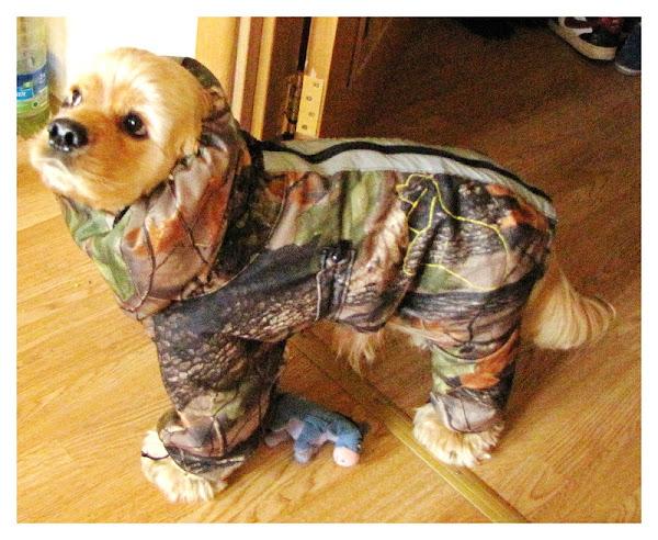 Xdogs ru - xdogs ru - одежда для собак