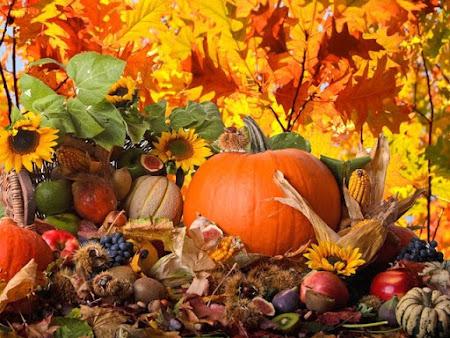 Машинная вышивка: октябрь - всё богатство осени