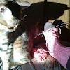@londons_cat