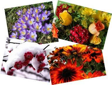 Помощь в определении цветотипов и подтипов