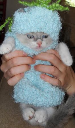 My Knitting Island или Простенько от Светланы.